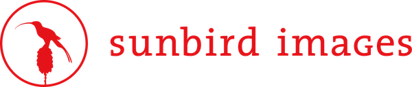 Sunbird Images