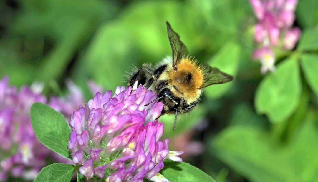 Pollination Rates Are Higher In German Cities Than The Countryside